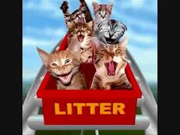 Image result for cat screaming on roller coaster ride