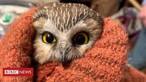 Tiny owl rescued from New York Rockefeller Center <b>Christmas tree</b> ...