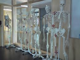 anatomy lab or queue for the post office anatomy office