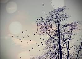 سعادتك تعنيّ عصافير قلبي تحلّق images?q=tbn:ANd9GcS