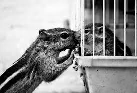 Los animales tienen emociones