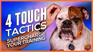 How to Pet Your Dog - <b>4</b> Touch Tactics to Supercharge Training ...