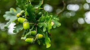 7-<b>Spot</b> Ladybird (Coccinella septempunctata) - Woodland Trust