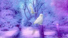 Pin by Nie Fayth on Owls.. my favorite animal | Animal spirit guides ...