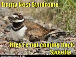 empty-funny-animal-meme-pictures-4.jpg via Relatably.com