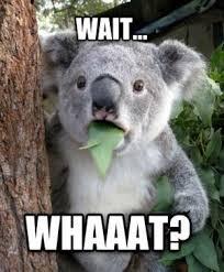 Koala Bear Meme | Kappit via Relatably.com