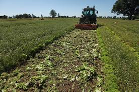 stop subsidies  switch to organic farming   al jazeera englishregenerative farming is now firmly established and is becoming more popular  gallo getty