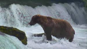 Brown Bear Cam - Brooks Falls in Katmai National Park | Explore.org
