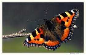 """Résultat de recherche d'images pour """"effet papillon"""""""