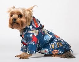 <b>Толстовки для собак</b> в Ижевске (500 товаров) 🥇