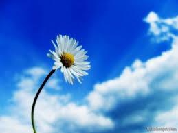 Resultado de imagem para carequinha do vovo flor