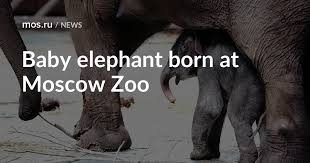 <b>Baby elephant</b> born at Moscow Zoo / News / Moscow City Web Site