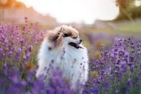<b>Flower</b> Names for <b>Dogs</b> | 45 Gorgeous <b>Dog</b> Names Beyond Daisy ...