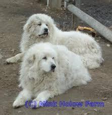 Στη Θεσπρωτία θανατώθηκαν σκύλοι από αστυνομικό...