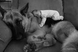 Resultado de imagen para fotos de perros durmiendo con personas