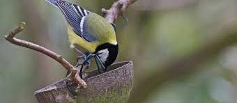 Nine ways to build a wildlife friendly <b>garden</b> | National Trust