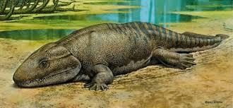 Resultado de imagem para os primeiros anfibios