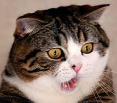 Shocked cat | Reaction Images | Know Your Meme via Relatably.com