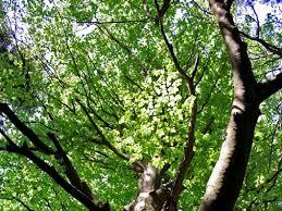 Approfondimenti conoscitivi su alcune aree di interesse ambientale ...