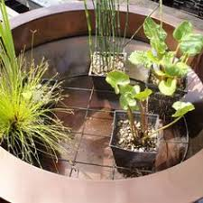 diy patio pond: planting container ponds tips on planting a water gardening container pond feature with small varieties of