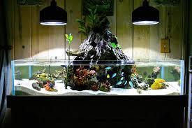 Membuat Aquarium Air Laut