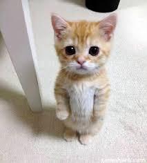 Meme Creator - Cute Sad Cat Meme Meme Generator at MemeCreator.org ... via Relatably.com