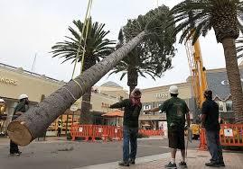 Citadel: the Tallest Xmas Tree | California Apparel News