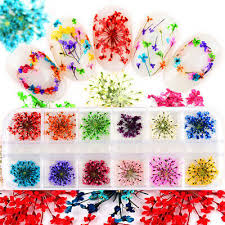 <b>24Pcs Real Pressed Flower</b> Anne's Lace Dried Flower Nail Art ...