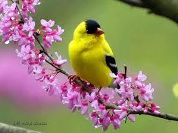 طيور رائعة images?q=tbn:ANd9GcS