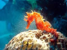 أكبر تجميع لأجمل صور من اعماق البحار (سبحان الله الخالق العظيم) - صفحة 2 Images?q=tbn:ANd9GcSfyOaWTMM7_I9jO3YBkdDIhVZAxgICcAzZk1Y7nU8FElTU2ZNW