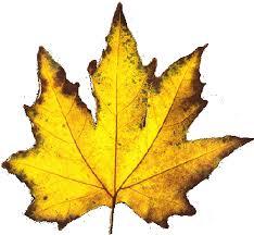 """Résultat de recherche d'images pour """"feuilles"""""""