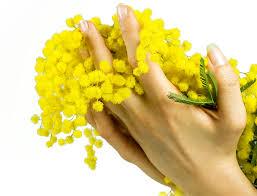 Resultado de imagen de ramo de mimosas