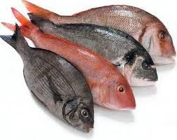 Αποτέλεσμα εικόνας για ψαρια φωτογραφιες