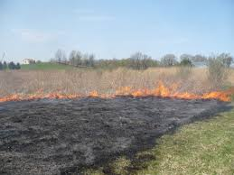 Image result for fire in a field pictures