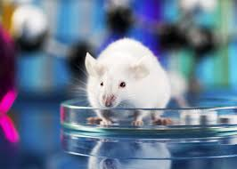 best images about animal testing experimentation dissection 17 best images about animal testing experimentation dissection on global organization mice and animals