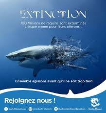 sharks mission sauver les requins preacutesence sur les reacuteseaux sociaux