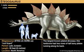 <b>Stegosaurus</b> | Description, Size, Plates, & Facts | Britannica