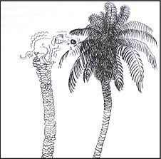 talking plants coconut palm just like a w coconut palm just like a w