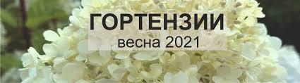 Луковицы для выгонки - Луковичные - Каталог - PlantMarket.ru