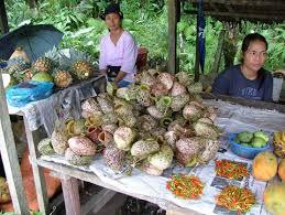 Ascidi di Nepenthes venduti al mercato