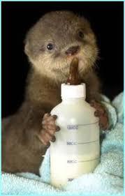 Resultado de imagen para baby otters