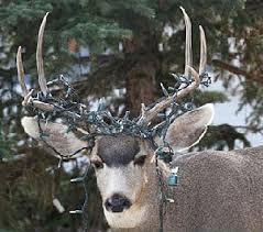 <b>HAPPY NEW DEER</b> – Montana Grant Fishing & Hunting – Grant ...