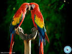 Pictures of 2 parrots kissing images download <?=substr(md5('https://encrypted-tbn2.gstatic.com/images?q=tbn:ANd9GcSgyku3mAEqHkUMI_X7S5MbKBj2w6z9ToqjYkE8eMD5tdnLKQeqWDCJW5M'), 0, 7); ?>