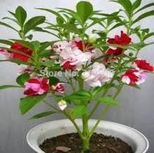 Popular <b>Henna</b> Plant-Buy Cheap <b>Henna</b> Plant lots from China ...