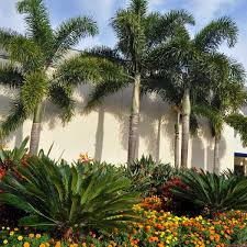 landscape maintenance brisbane office plants