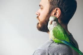<b>Bird Heart</b> Health