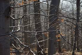 <b>Autumn</b> Walk • Relaxing Nature Sounds Wandering Ambience
