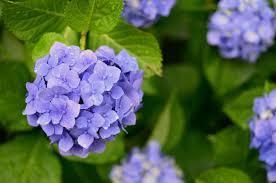 10 <b>Easy</b>-to-Grow Plants for <b>Outdoors</b>