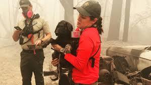 North Complex <b>Fire</b> : <b>Puppy</b> found alive in rubble of deadly california ...