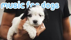 11 HOURS of Relaxing <b>Dog Music</b> to Reduce Anxiety and Help ...